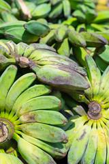 Green banana bunches
