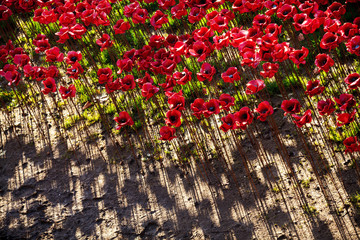 Tower of London Ceramic Red Poppies and Shadows