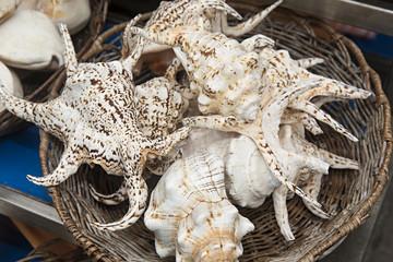 Conchas marinas variadas