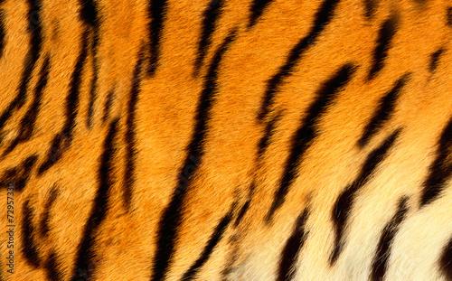Papiers peints Tigre Bengal tiger skin.