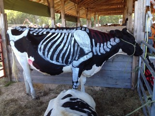 painted cow at the fair