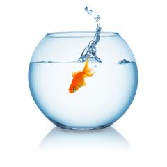 fisch springt in goldfischglas