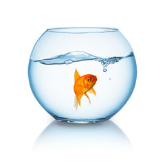 Goldfish floating in fishbowl