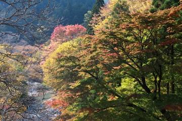 紅葉と清流