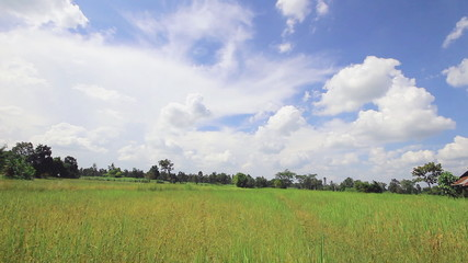 Rice farm with sky ,Time lapse