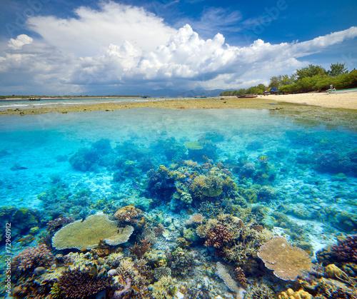 Leinwanddruck Bild Beautiful Coral Reef.