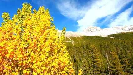 Banff National Park Fall Colors