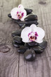 White orchids and black stones close-up