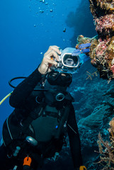 Diver taking picture tunicates in Derawan, Kalimantan underwater