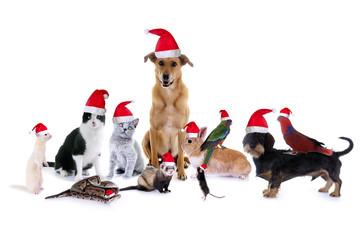 Gruppe Haustiere mit Nikolausmützen