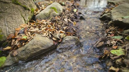 Creek with autumn leaf