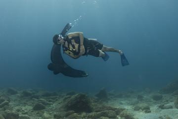 Scuba diver and Seal sea lion in baja california