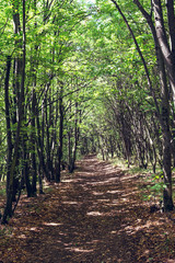 Tree alley and footpath in the woods