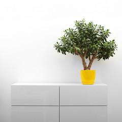 crassula plant on white commode in minimalism interior