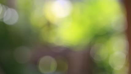 nature green boke