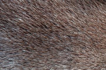 Fur structure