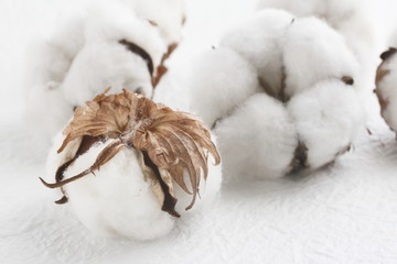 木綿 cotton