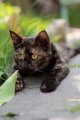 cat looks at nature