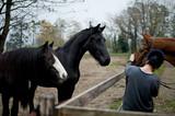 Equitazione che passione 6