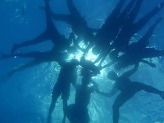 Friendship in the sea