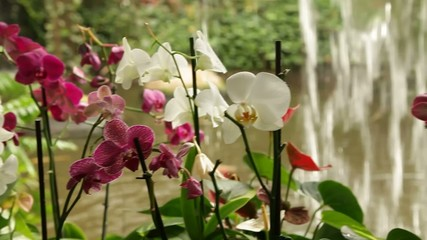 blooming orchids in the park on a background of a waterfall