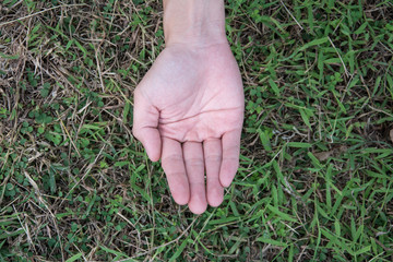 open hand of  woman  over a green grass background, top view