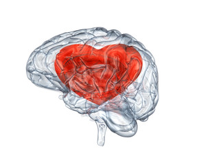 Brain with heart within