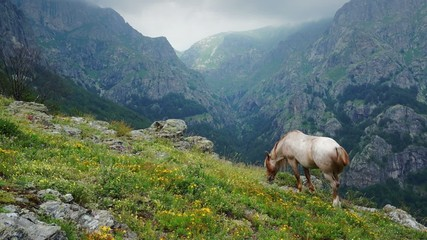 Grazing in the mountains