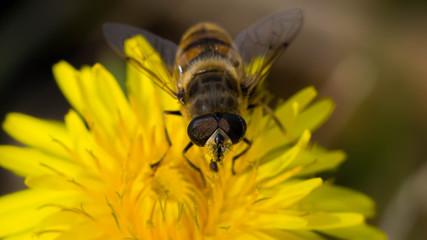 insecte & fleur