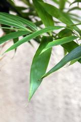 竹の葉No.2