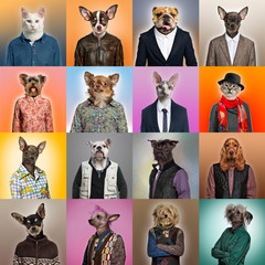 Composition of pets dressed