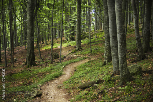 AluDibond Wald Forest path