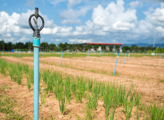 Sprinkler irrigation for agriculture field in developing country
