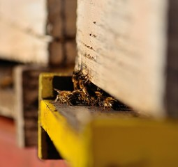 Hive with bees at the entrance