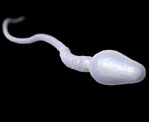 Single male sperm cell