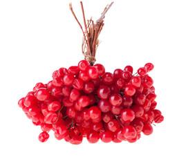 Ripe Guelder Berries
