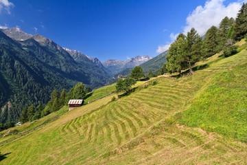 Trentino - Pejo valley, Italy
