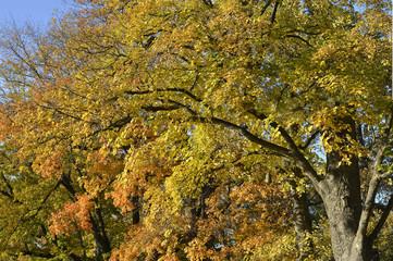 Goldene Bäume
