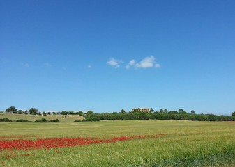 endlose mohnfelder auf mallorca