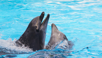 Two bottlenose dolphins in sea