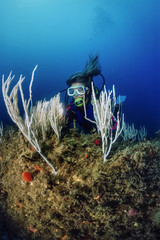 Mediterranean Sea, Tunisia, Tabarka, diver and white gorgonians