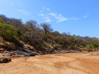 Affenbrotbaum ausgeckneten Flussbett Barai Tansania