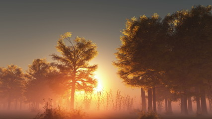 rising sunrise in forest