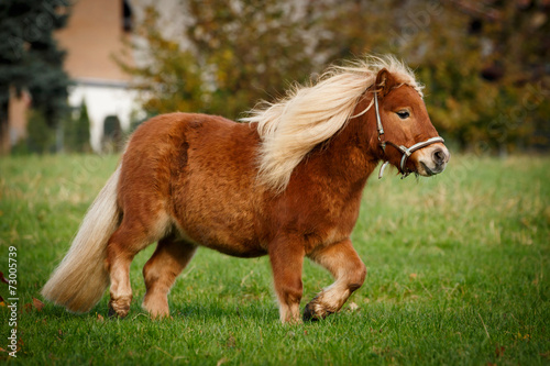 Foto op Canvas Ree Dickes Pony trabt
