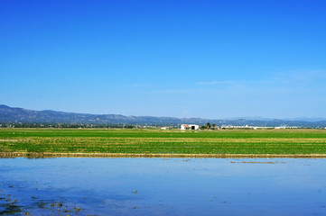 paddy field in Delta del Ebro, in Catalonia, Spain