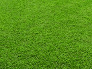 Green grass surface