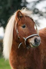 Ponyzopf