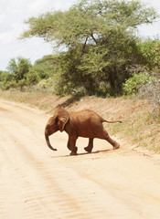 Elephant crossing road in Africa