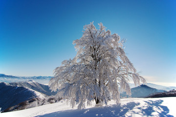 FROSTED TREE UNDER BLUE SKY
