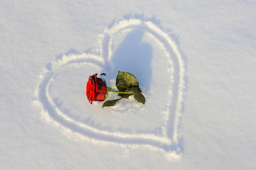 heart and rose in snow as symbol for love